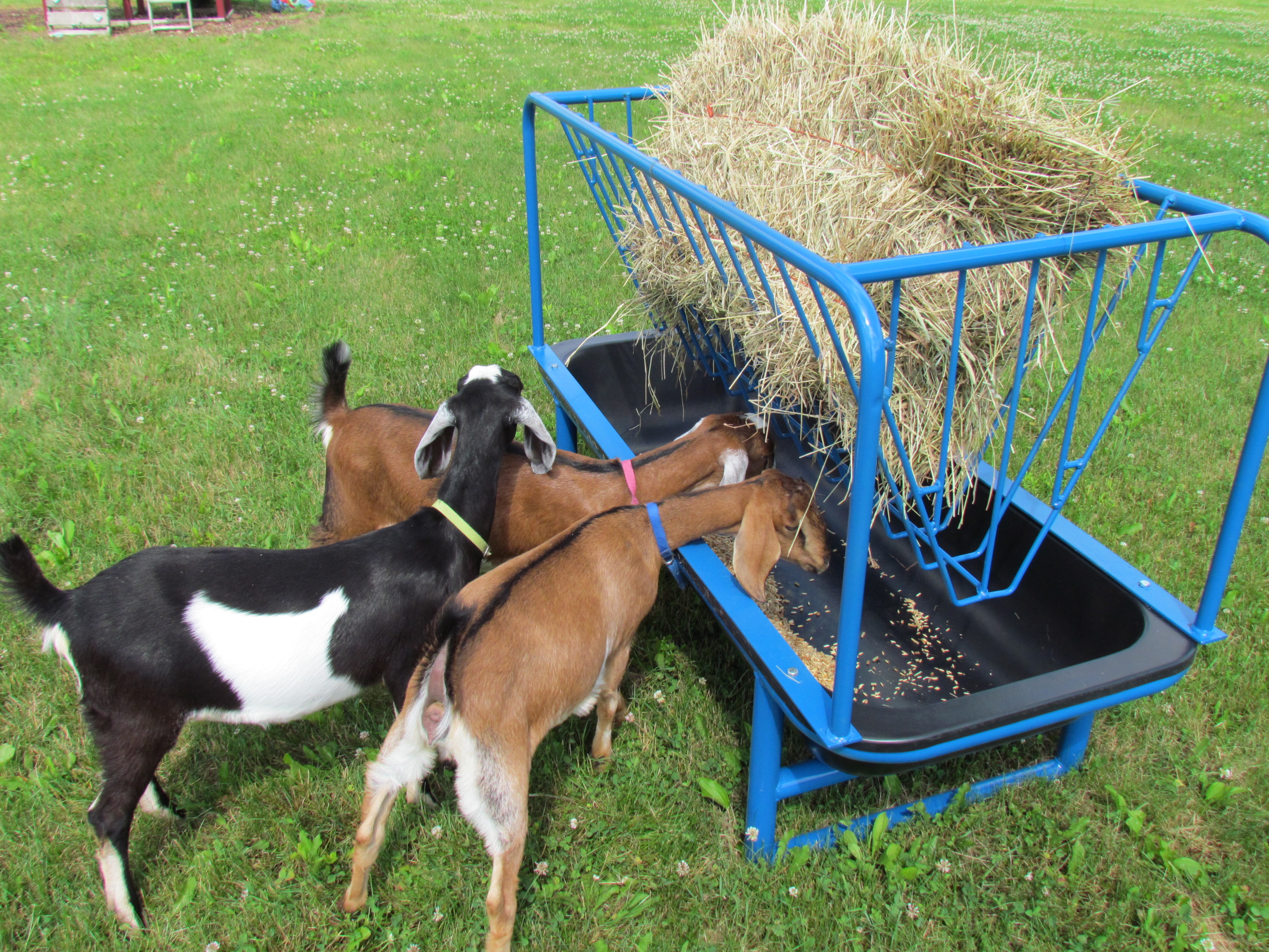 5 foot Hay Manger for Goats and Sheep