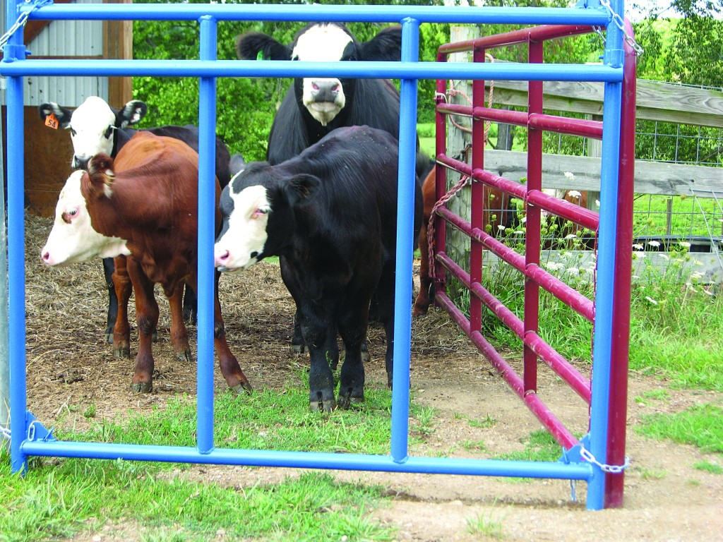 Calf Creep Feeder Panel